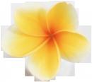 hula01.png